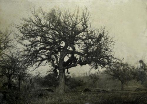 Emile-Boggio-photographies-Boggio, arbol